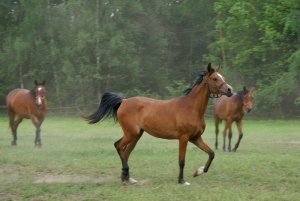 Stadnina koni w Klepaczach